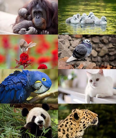 World-of-Beautiful-Animals-Wallpaper