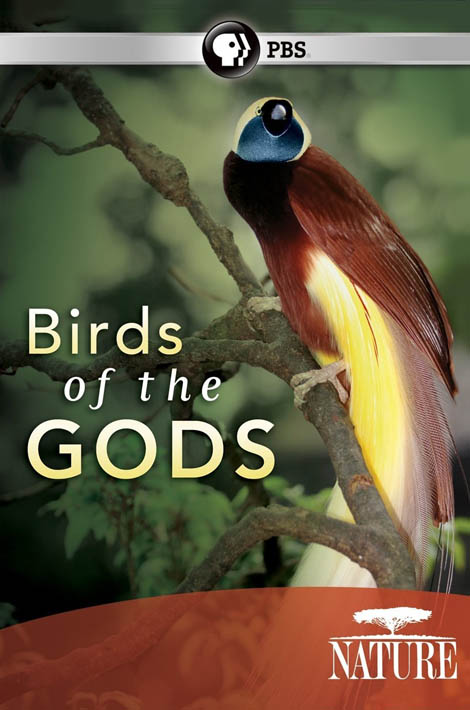 Birds-of-the-Gods-2011
