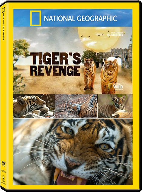 National-Geographic-Tigers-Revenge-2015